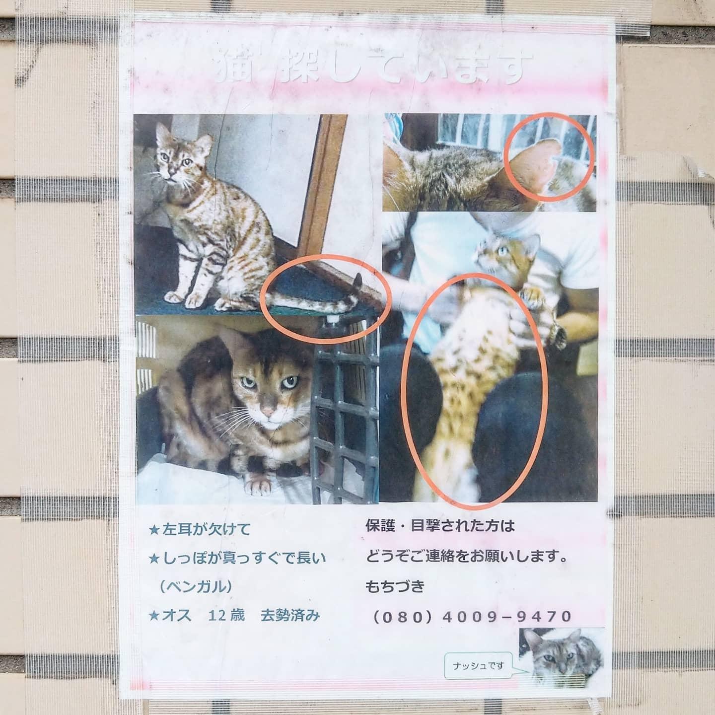 #武蔵小山情報 #迷い猫 ベンガルのナッシュを探してます。