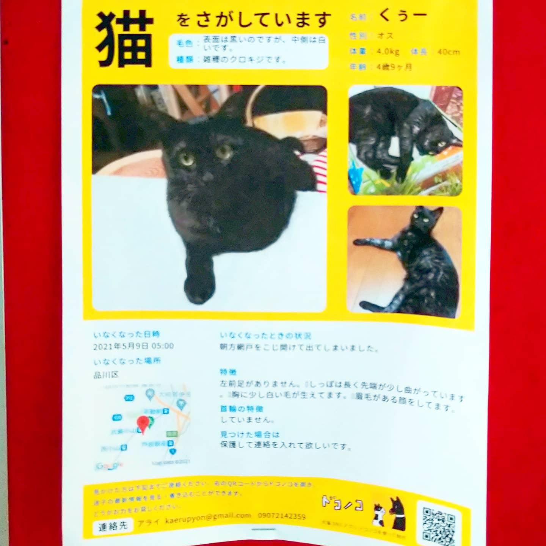 #武蔵小山情報 #迷い猫 くぅーを探してます。見つかりますように…#猫 #迷い猫探してます #迷い猫さがしてます #迷い猫捜索中 #迷い猫捜索 #猫を探しています #猫探してます #武蔵小山