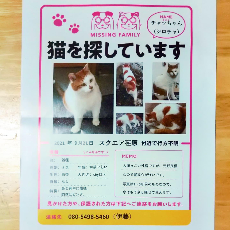 #武蔵小山情報 #迷い猫 チャッちゃんを探してます。スクエア荏原付近で行方不明だって。見つかりますように…#猫 #迷い猫探してます #迷い猫さがしてます #迷い猫捜索中 #迷い猫捜索 #猫を探しています #猫探してます #武蔵小山